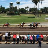 Alameda County Fair Horse Racing